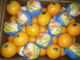 Египтский апельсин - фото 2