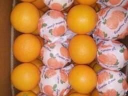 Египтский апельсин - фото 6