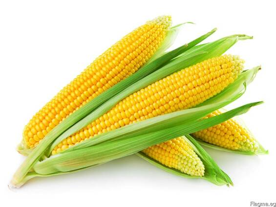 Greenfield Incorporation sells Yellow Corn