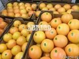 Грейпфруты красные - фото 2