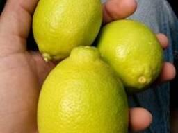 Лимон Адалия - фото 2