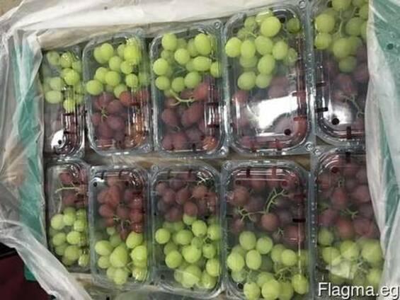 Виноград Египет