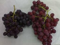 Виноград красний и белый - фото 2