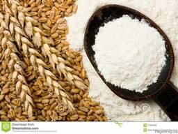 Wheat flour low price