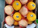 Апельсин сорта Навел - фото 2