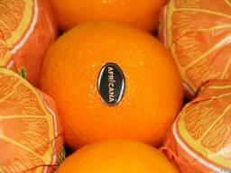 Апельсины Египетские - фото 3