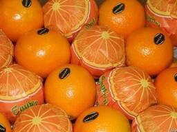 Апельсины Египетские - фото 5