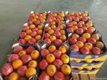 Апельсины Навел - фото 3