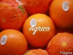 Апельсины свежие Египет