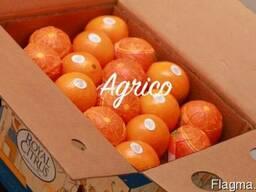 Апельсины свежие Египет - фото 2