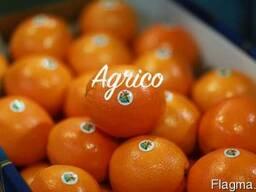 Апельсины свежие Египет - фото 3
