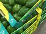 Авокадо из Египта - фото 1