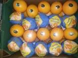 Египтский апельсин - фото 4