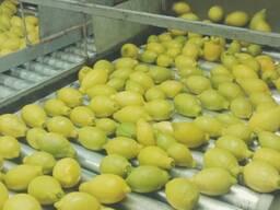 Лимоны Египет, оптом