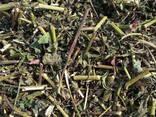 Medicinal herbs - фото 2