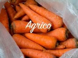 Морковь свежая - фото 2