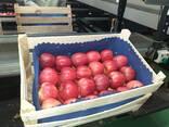 Polish apples, La-Sad - photo 1