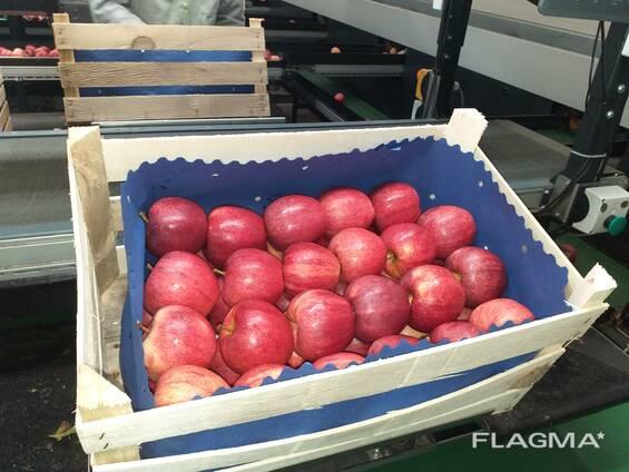 Polish apples, La-Sad