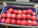 Polish apples, La-Sad - photo 2