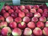Polish apples, La-Sad - photo 5