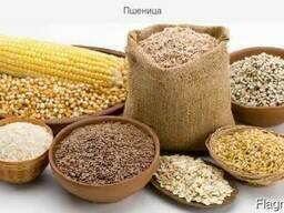 Пшеница - фото 2