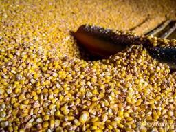 Selling Wheat, Barleyبيع القمح والشعير والذرة للتصدير