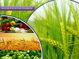 الشركة المصنعة والموردة للمبيدات في جميع أنحاء العالم - фото 1