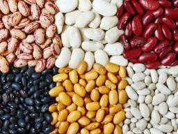 الفول وبذور الكتان والعدس والحمص والبازلاء وغيرها من المنتجات الزراعية.